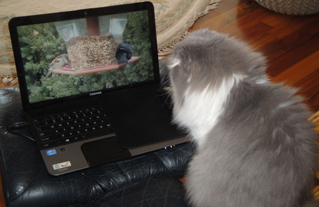 Cat Watching Videos