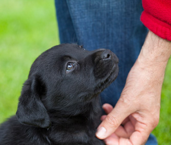 Petting puppy