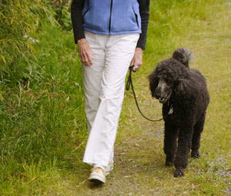 Senior woman walking Poodle