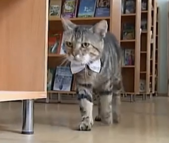 Kuzma wanders through the shelves at a library in Russia.