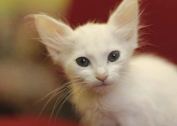 Popular female cat names uk