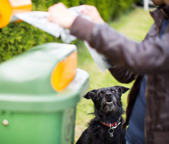 Cleaning up dog waste