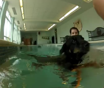 The Things We Do For Love My Dogs Go To A Doggie Swimming