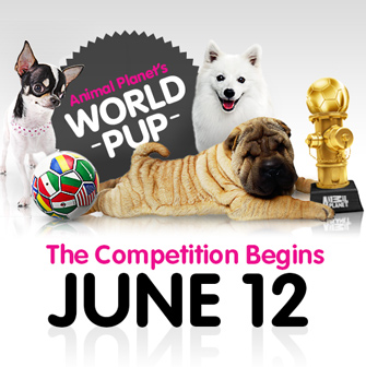 World Pup competition