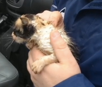 A meteorologist found a kitten in the rubble of a barn after a tornado in Ohio.