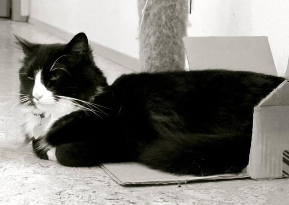 Henri the Cat