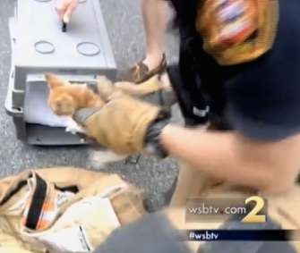 Firefighters saved a kitten from a storm drain in Georgia.