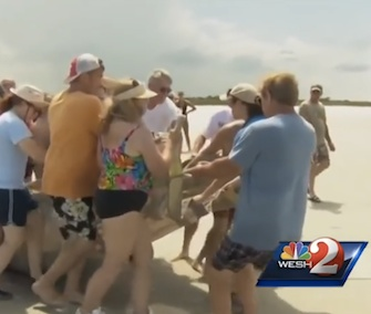 Beachgoers help authorities carry a stranded manatee back to the water in Florida.