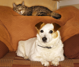 Dog and cat on a chair
