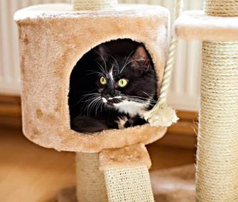 Cat in cat furniture