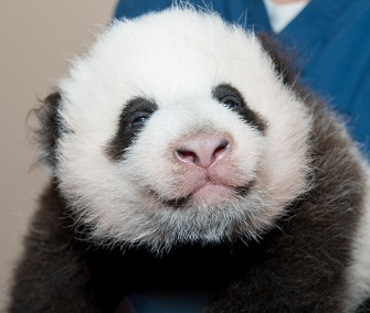 The National Zoo is asking for the public's vote to name its 2-month-old panda cub.