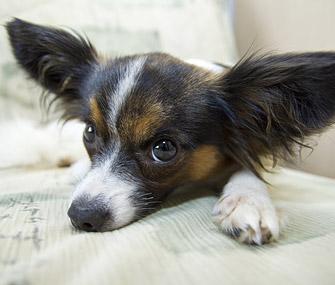 Dog lying on furniture