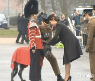 Duchess Kate tries to pin a sprig of shamrock on Irish Guards mascot Domhnall.