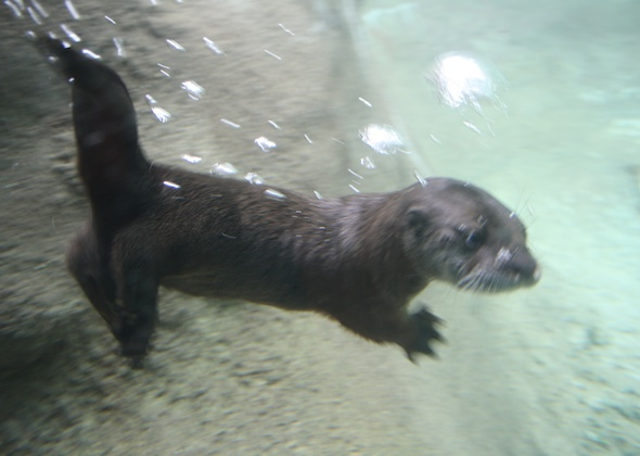 Detroit Zoo Otter