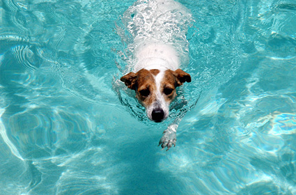 Dog swimming in a pool