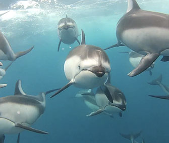 A new video captures up-close footage of dolphins swimming underwater.
