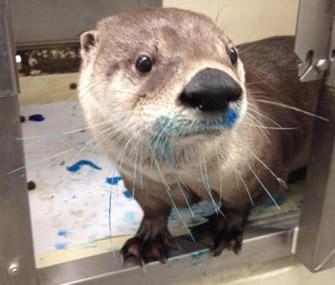 Zhoosh the otter