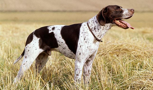 Dog Training Ap