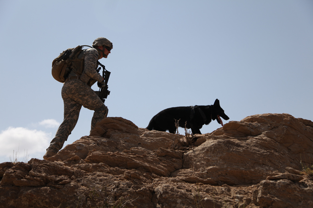 The Powerful Bond Between Soldier Dogs and Their Handlers