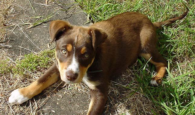 Red Dog Farm Animal Rescue