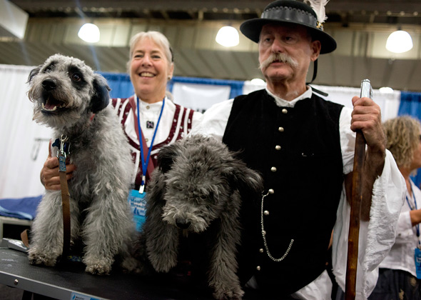 Meet the Breeds Pumi dogs