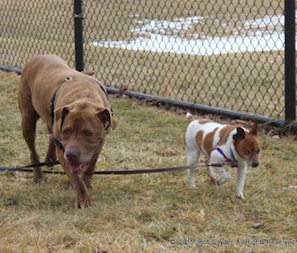 Fort Wayne Animal Care & Control is hoping to find someone to adopt both Hercules and Muellas.