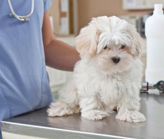 Puppy at Vet