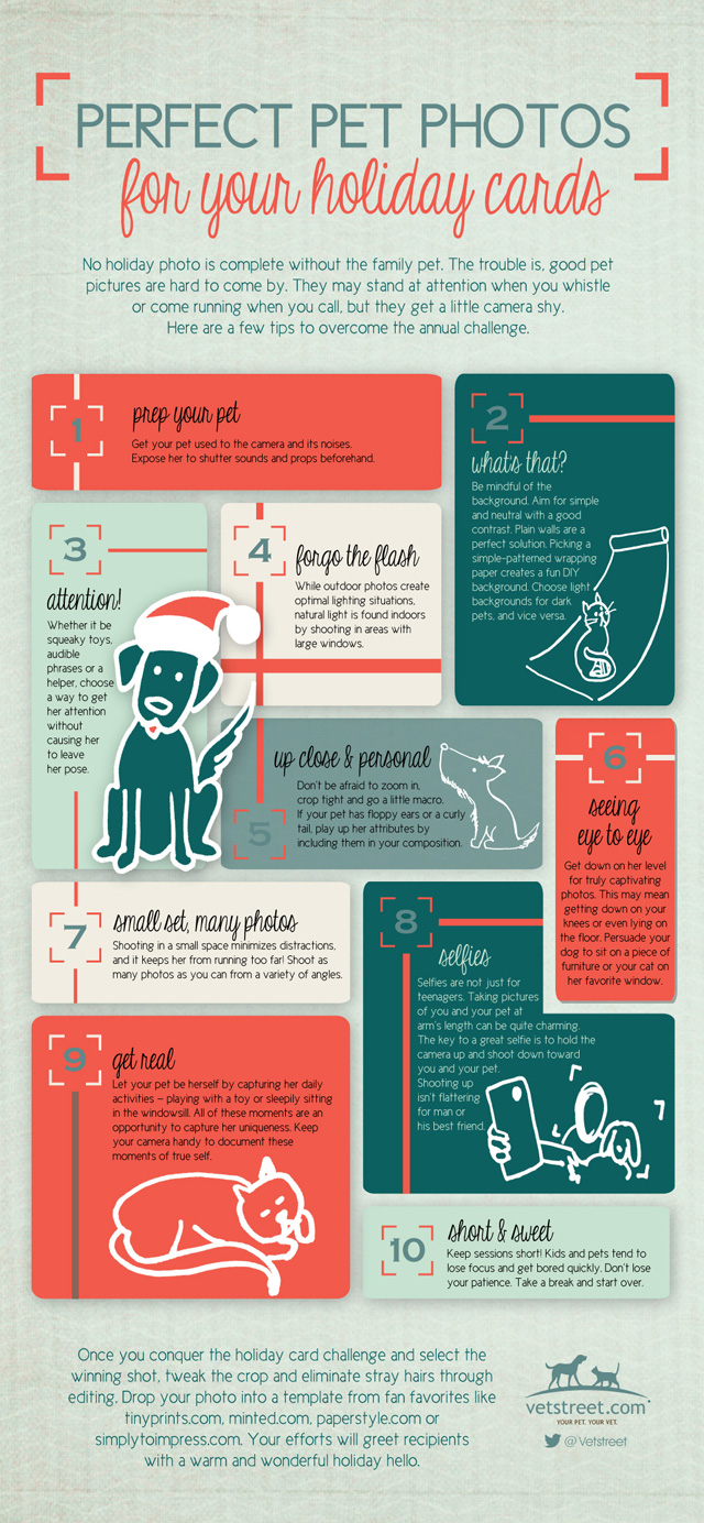 how to make a good card from your dog
