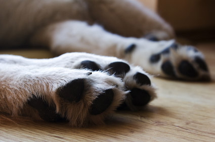 Dogs Paws
