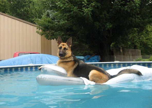 Dog on floaty in pool.