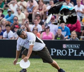 Purina Incredible Dog Challenge 2014