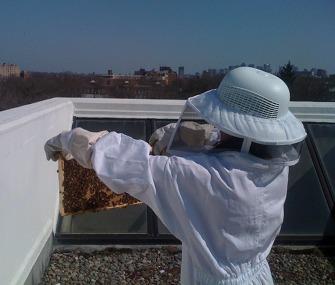Harvard Rooftop Bees