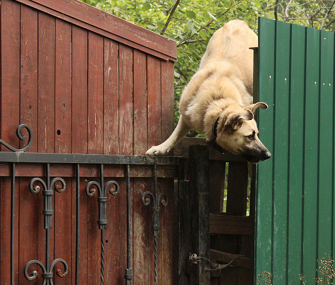 Dog Escaping