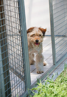 Dog in Kennel Run