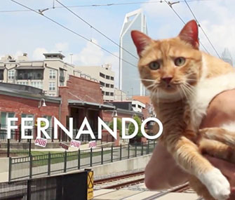 Fernando the cat stars in a video for the Democratic National Convention city, Charlotte, N.C.