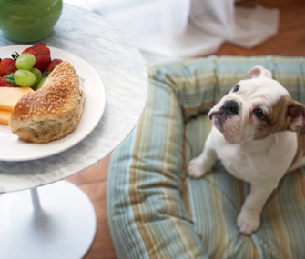 Puppy looking at food