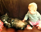 Baby laughs at French bulldog
