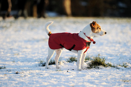 Dog in field during winter.