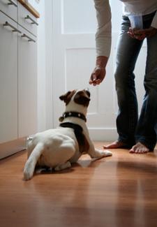 Man Giving Dog Treat
