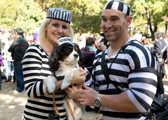 Dog Halloween Parade Prisoners