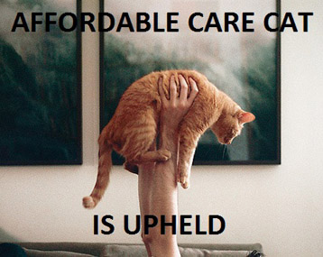 Affordable Care Cat