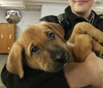 Six puppies who were rescued from a dumpster and raised by inmates are now off to forever homes.