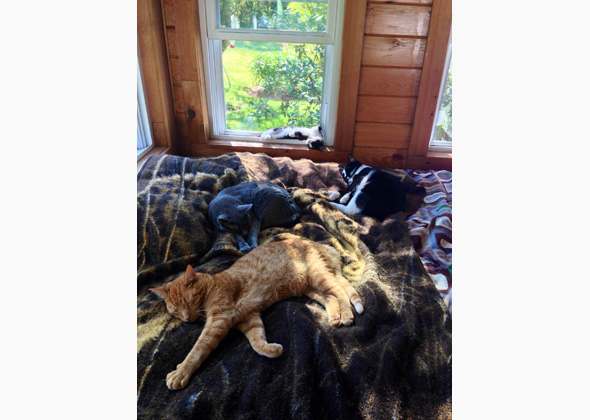 Cats sleeping on a bed