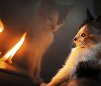 Kitten looking into fire