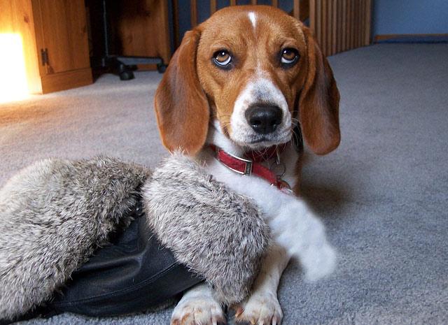 Cute Pet of the Week November 25, 2011