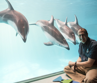 dolphins in a tank with a man in front