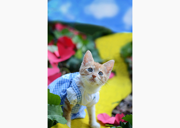 Wendy McKee kitten in Dorothy costume
