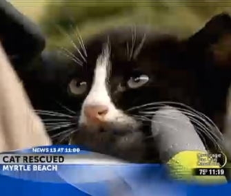 A black and white kitten was freed from a WBTW car engine in Myrtle Beach.