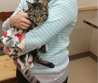 Moosie the cat survives 2 months inside mattress