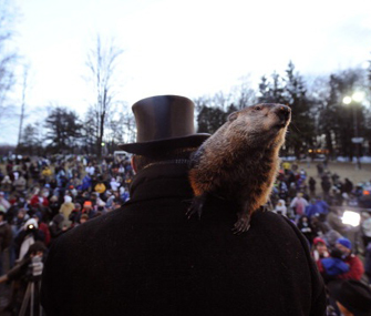 Punxsutawney Phil on Groundhog Day